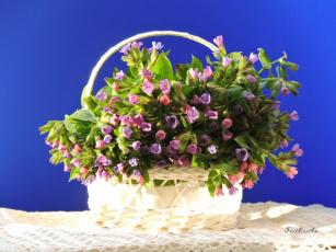 обоя медуница, цветы, весна, корзинка, красота, натюрморт, фото