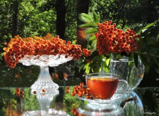 обоя еда, натюрморт, август, ягоды, предметы, фото, композиция, рябина, чай