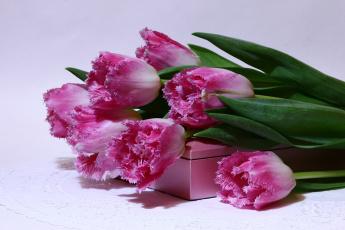 обоя цветы, тюльпаны, букеты, весна, вф, март, нфд, пф