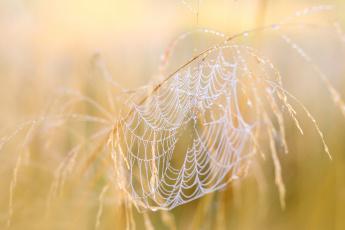 обоя природа, макро, паутина, осень