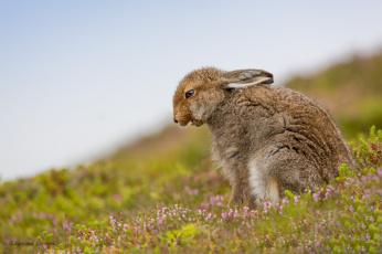 обоя животные, кролики,  зайцы, животное, цветы, природа, трава, заяц