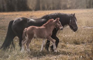 обоя животные, лошади, horse, животное, красавцы, handsome, animal
