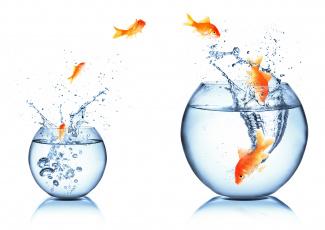 Картинка животные рыбы брызги white background spray aquarium fish water вода аквариум белый фон