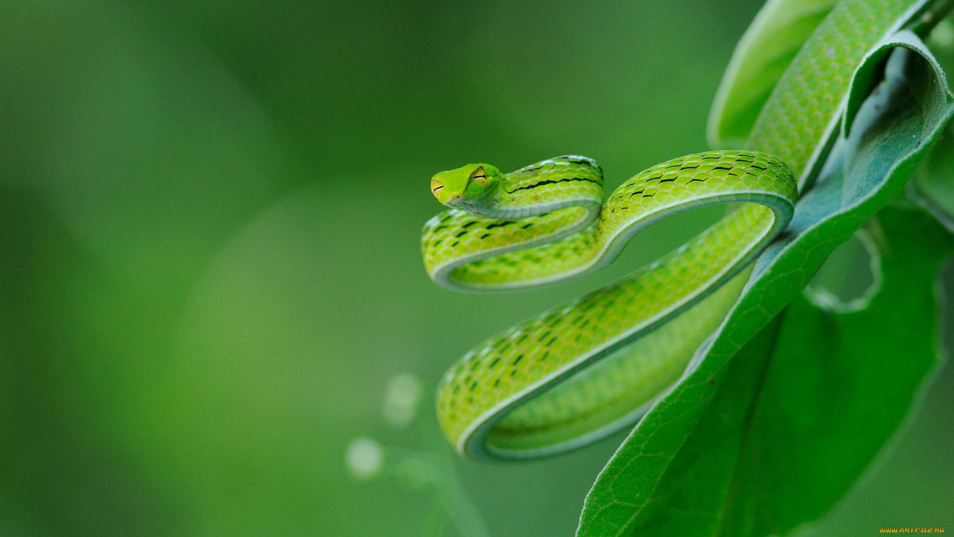 Зеленая змея макро съемка  № 3233988 без смс