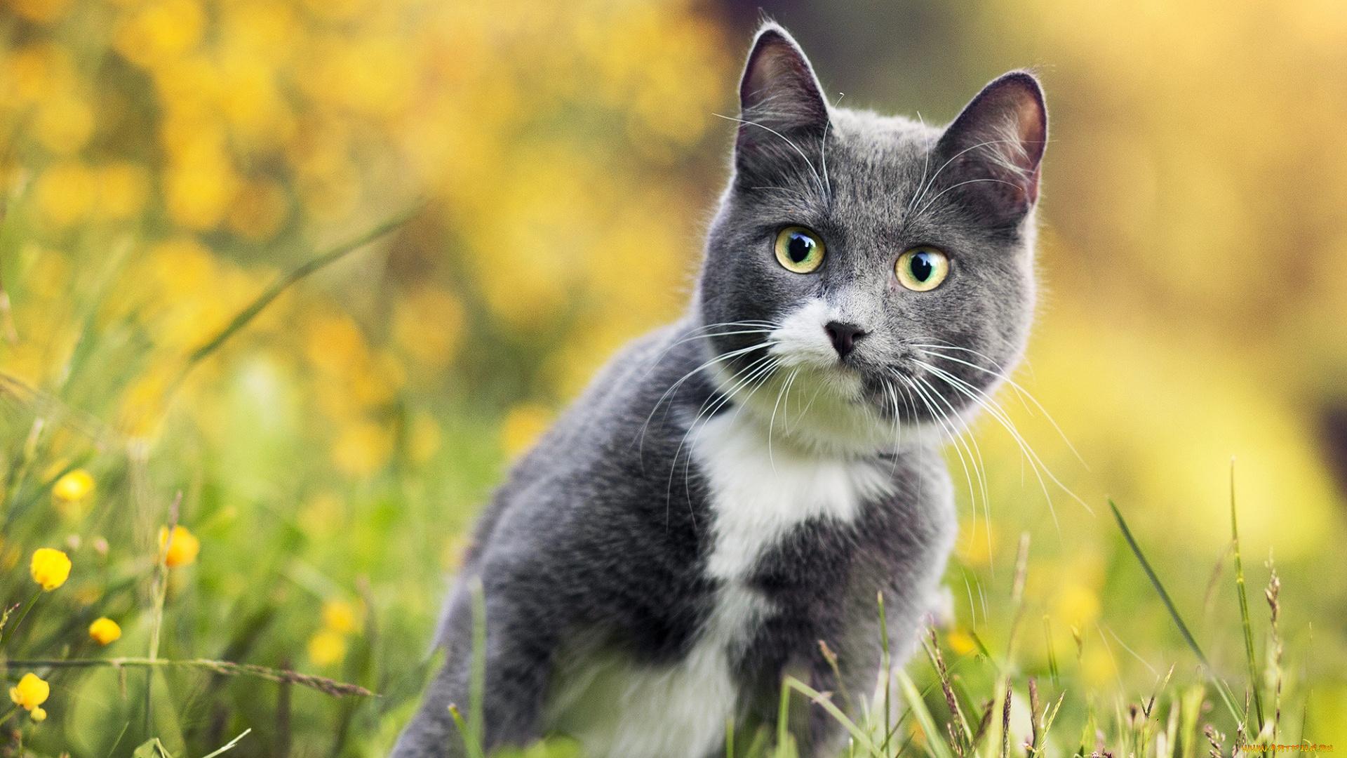 природа животные кот серый язык без смс