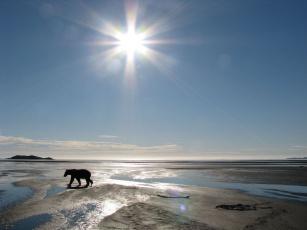Картинка животные медведи bear