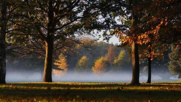 Картинка природа деревья дубы осень туман поляна лес