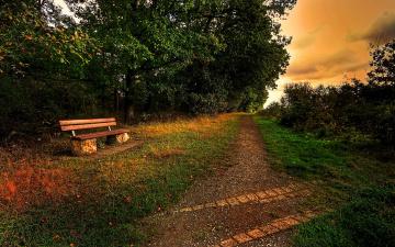Картинка природа парк деревья скамейка дорожка