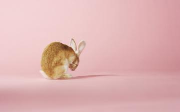 Картинка животные кролики +зайцы заяц умывание розовый фон