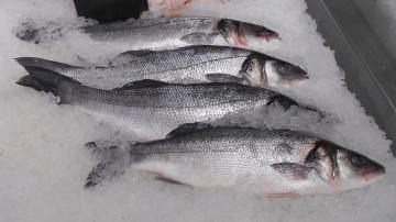 обоя рыба, еда,  морепродукты,  суши,  роллы, морепродукты