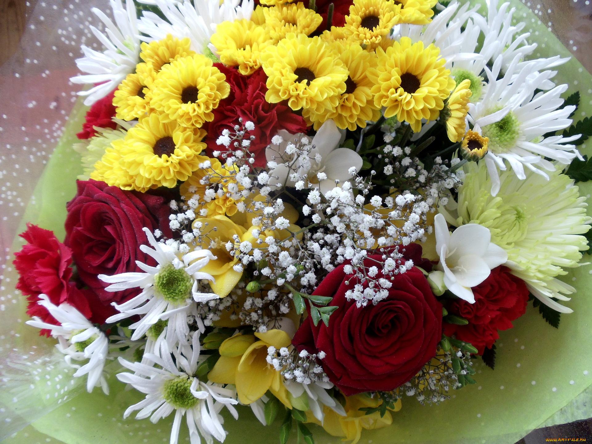Красивая, открытки днем рождения хризантемы