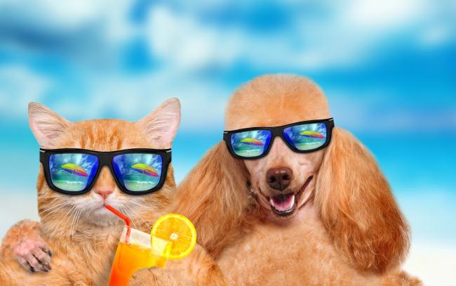 Обои картинки фото юмор и приколы, dog, vacation, summer, cat
