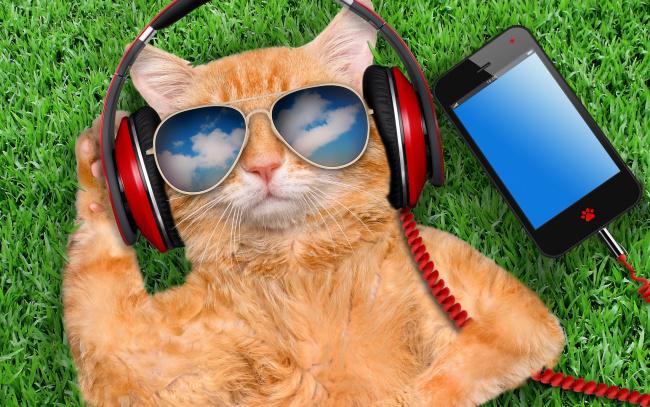 Обои картинки фото юмор и приколы, grass, cat, glasses, smart, phone