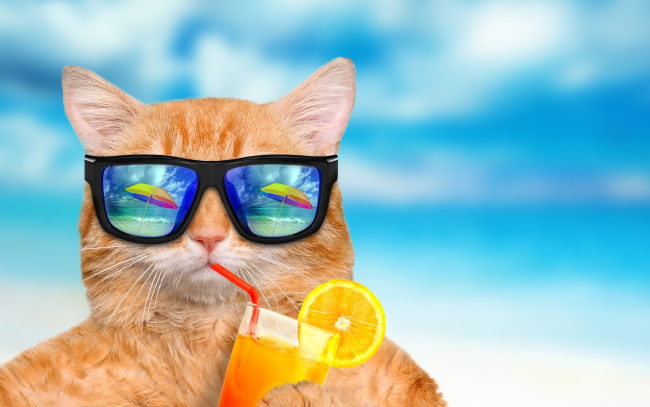 Обои картинки фото юмор и приколы, summer, cat