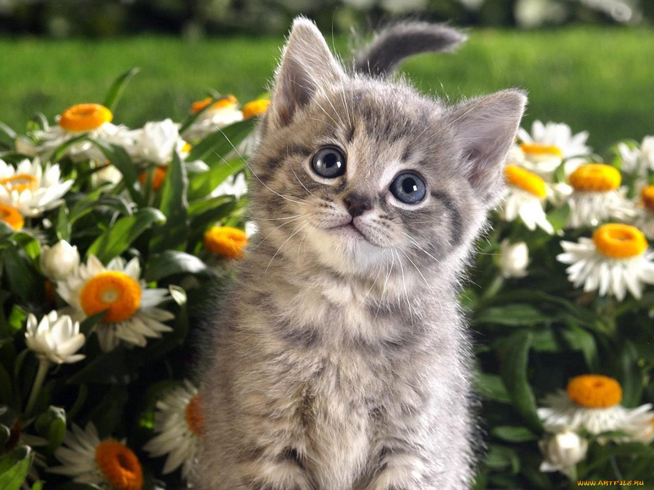 Красивые котейки картинки, ветка открытка учитель