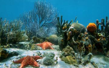 обоя животные, морские звёзды, underwater, ocean, coral, reef, sand, starfish, tropical