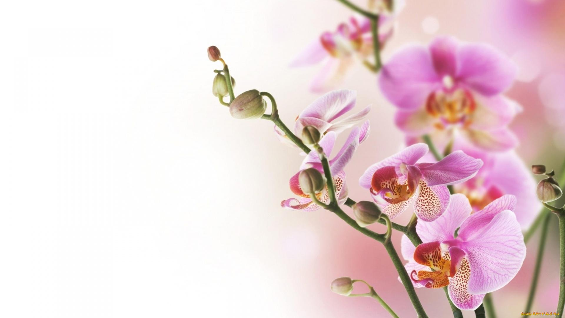 Восьмой марта, картинка с 8 марта креативная с орхидеей