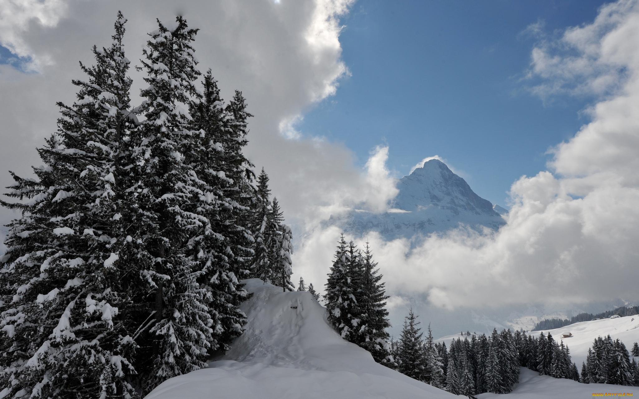 ели горы снег зима ate mountains snow winter скачать