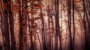 Картинка природа лес краски осень