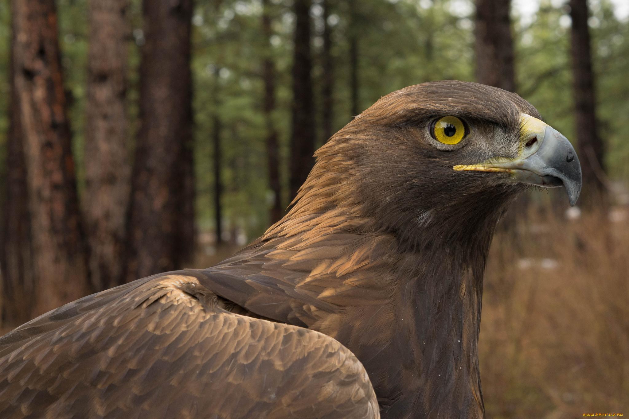 содержат природные каталог фотографии хищных птиц с названиями конечно