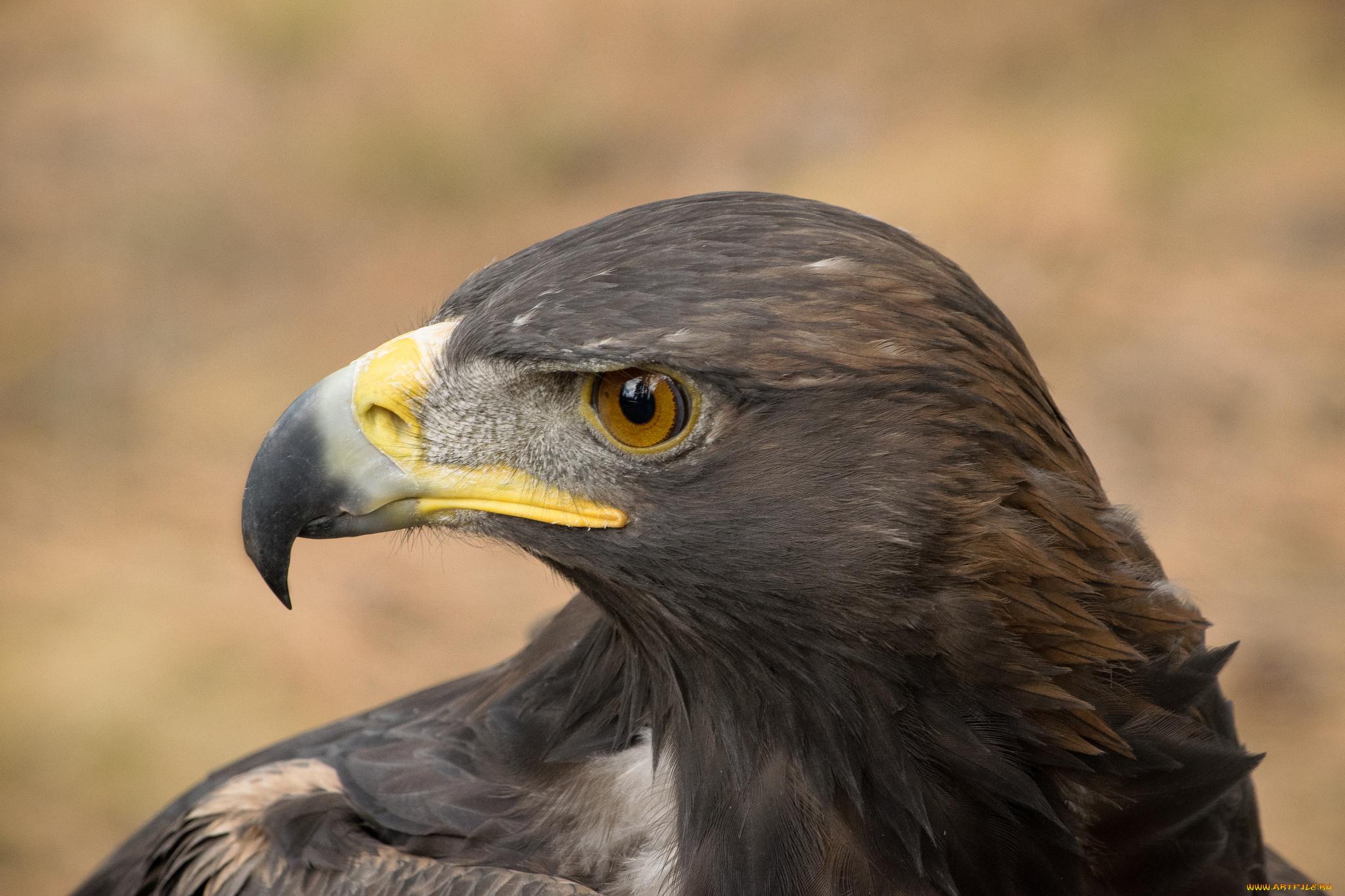 правило, каталог фотографии хищных птиц с названиями поезде анапы или