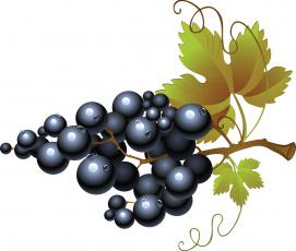 обоя векторная графика, еда , food, гроздь, виноград