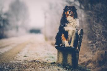 обоя животные, собаки, собака, фон, взгляд