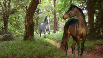 обоя животные, лошади, лес