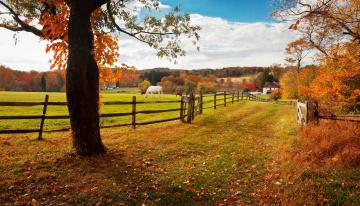 обоя хантингдон-вэлли,  пенсильвания,  сша, животные, лошади, деревья, осень, селение, ограда, луг