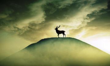обоя животные, олени, силуэт, олень, небо, облака, туман, гора