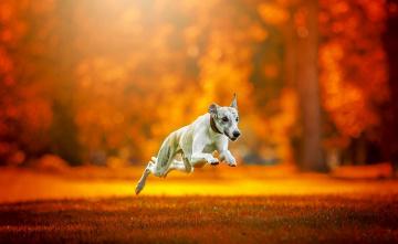 обоя животные, собаки, друг, бег, собака
