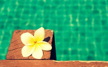 обоя цветы, плюмерия, цветок, бассейн, вода