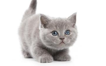 обоя животные, коты, котёнок