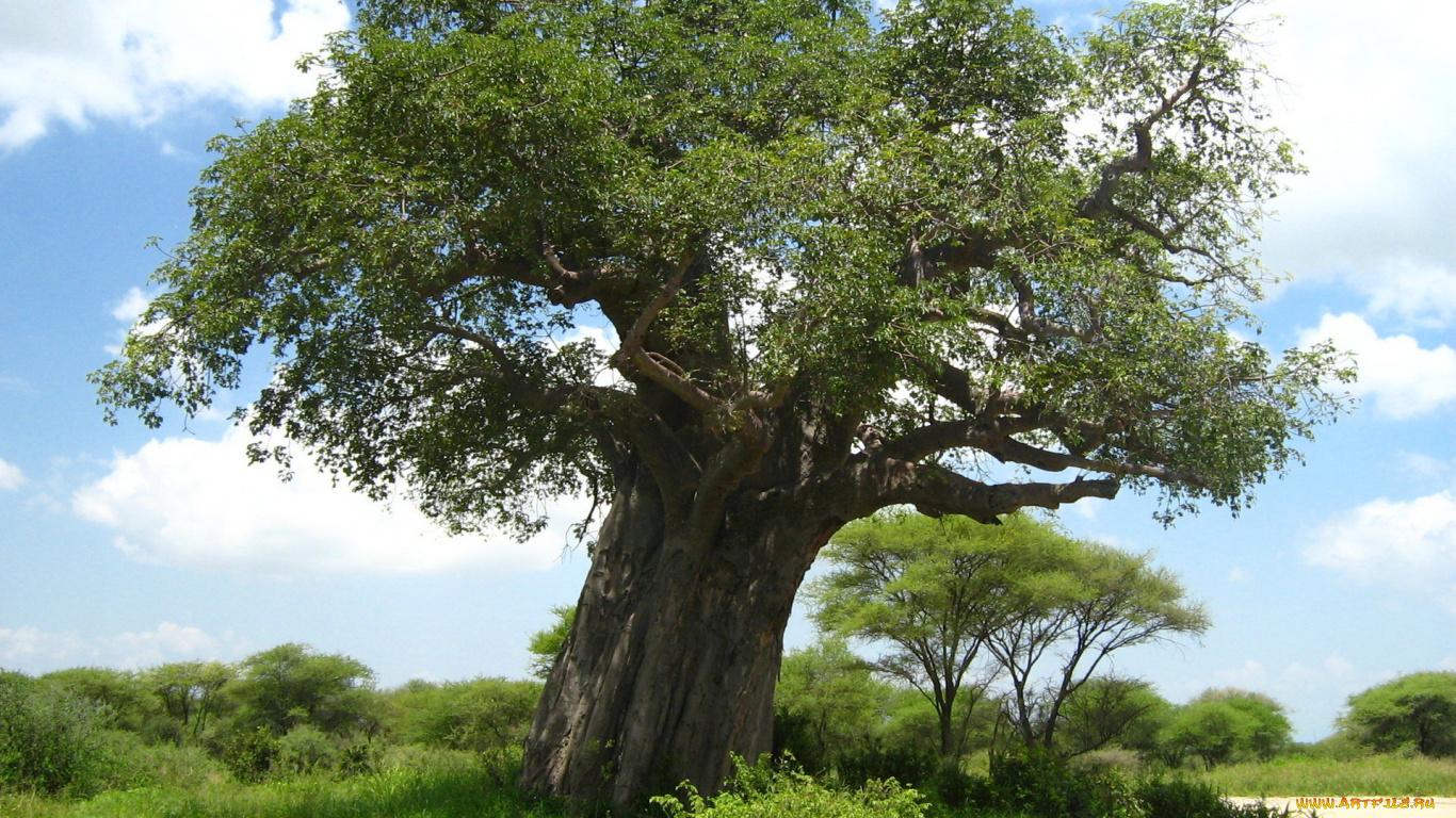 картинка длинное дерево