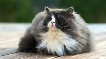 Картинка животные коты кошка