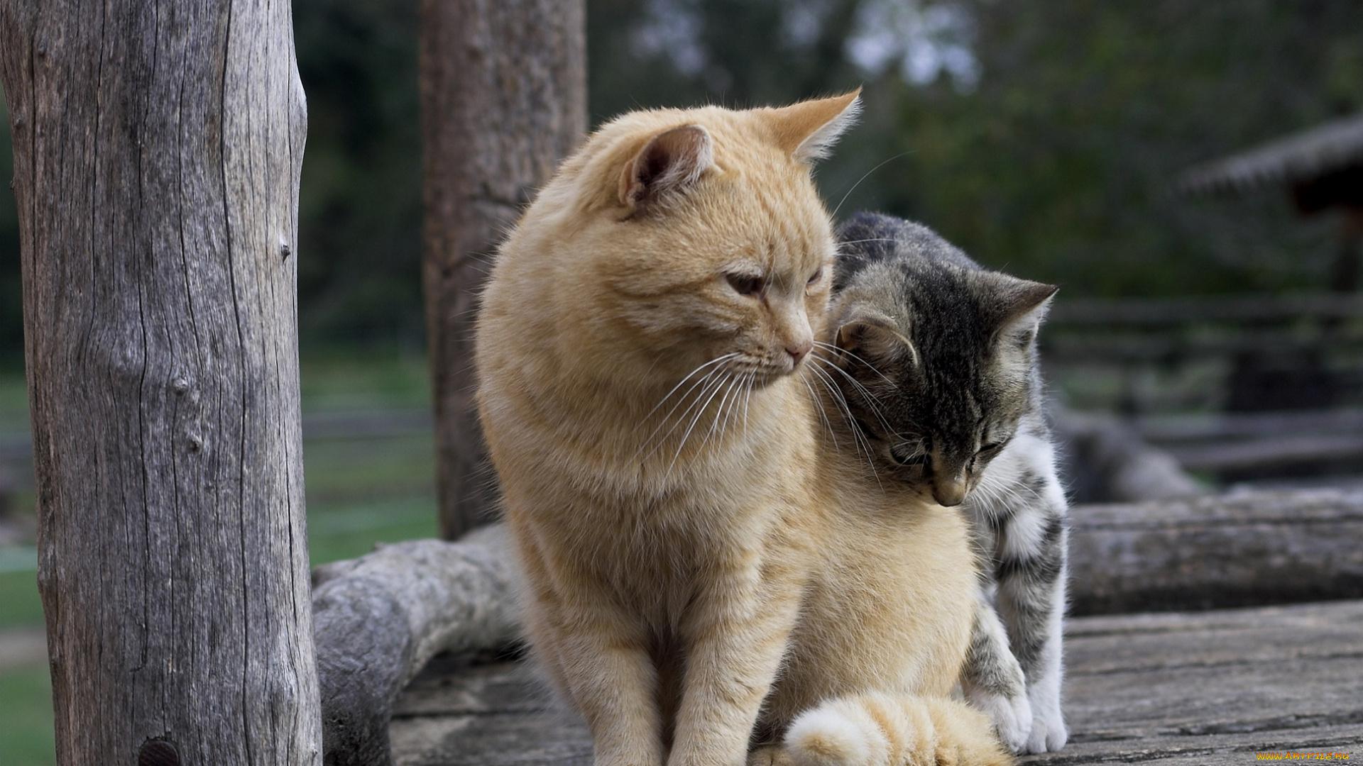 картинки где котики дружат укладываются