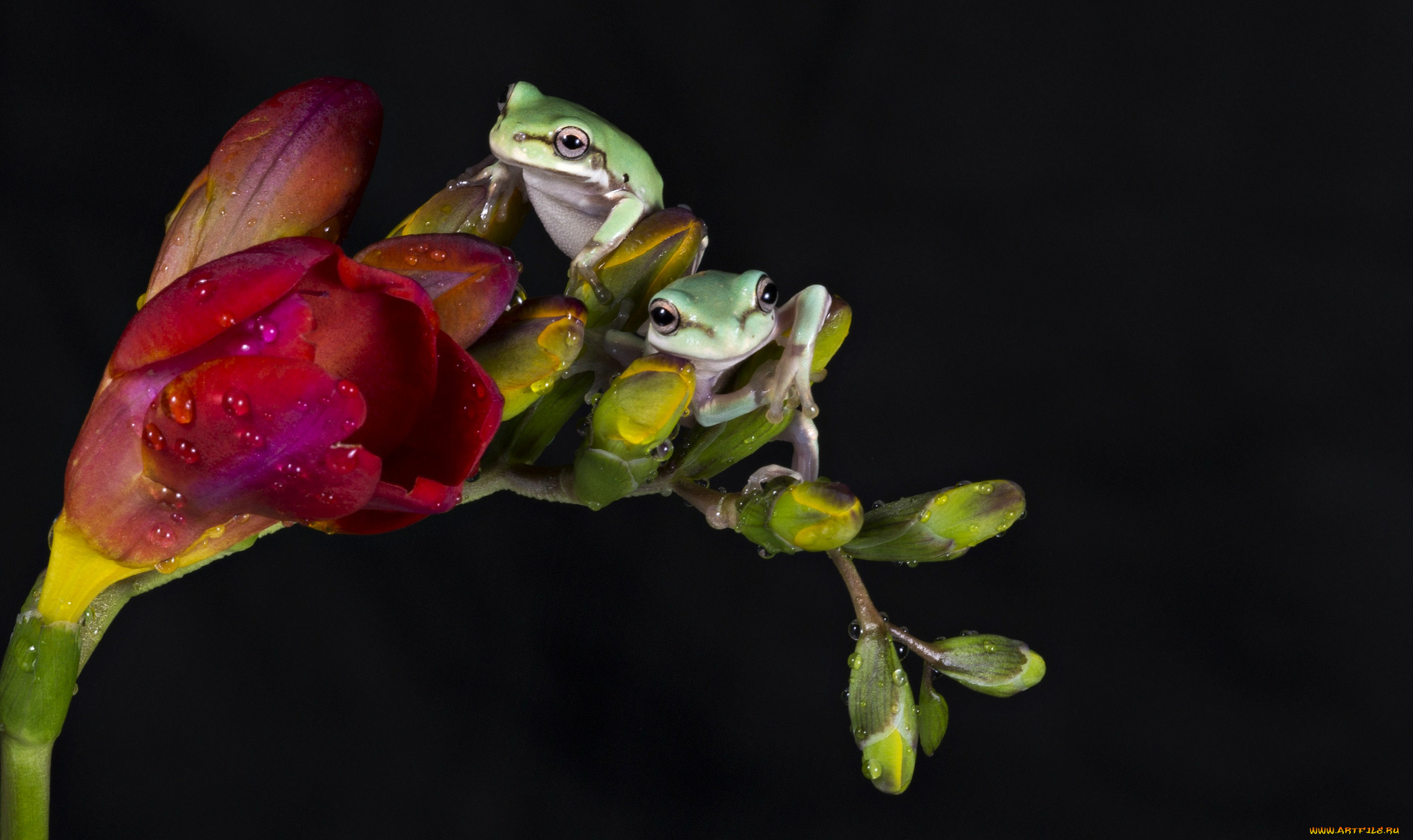 природа цветы животное лягушка  № 3068585 бесплатно
