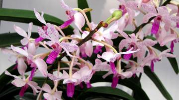 Картинка цветы орхидеи экзотика