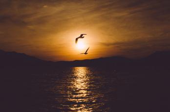 Картинка природа восходы закаты рассвет солнце закат облака вечер птицы небо