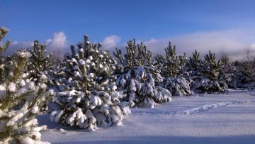 обоя природа, зима, красота, родной