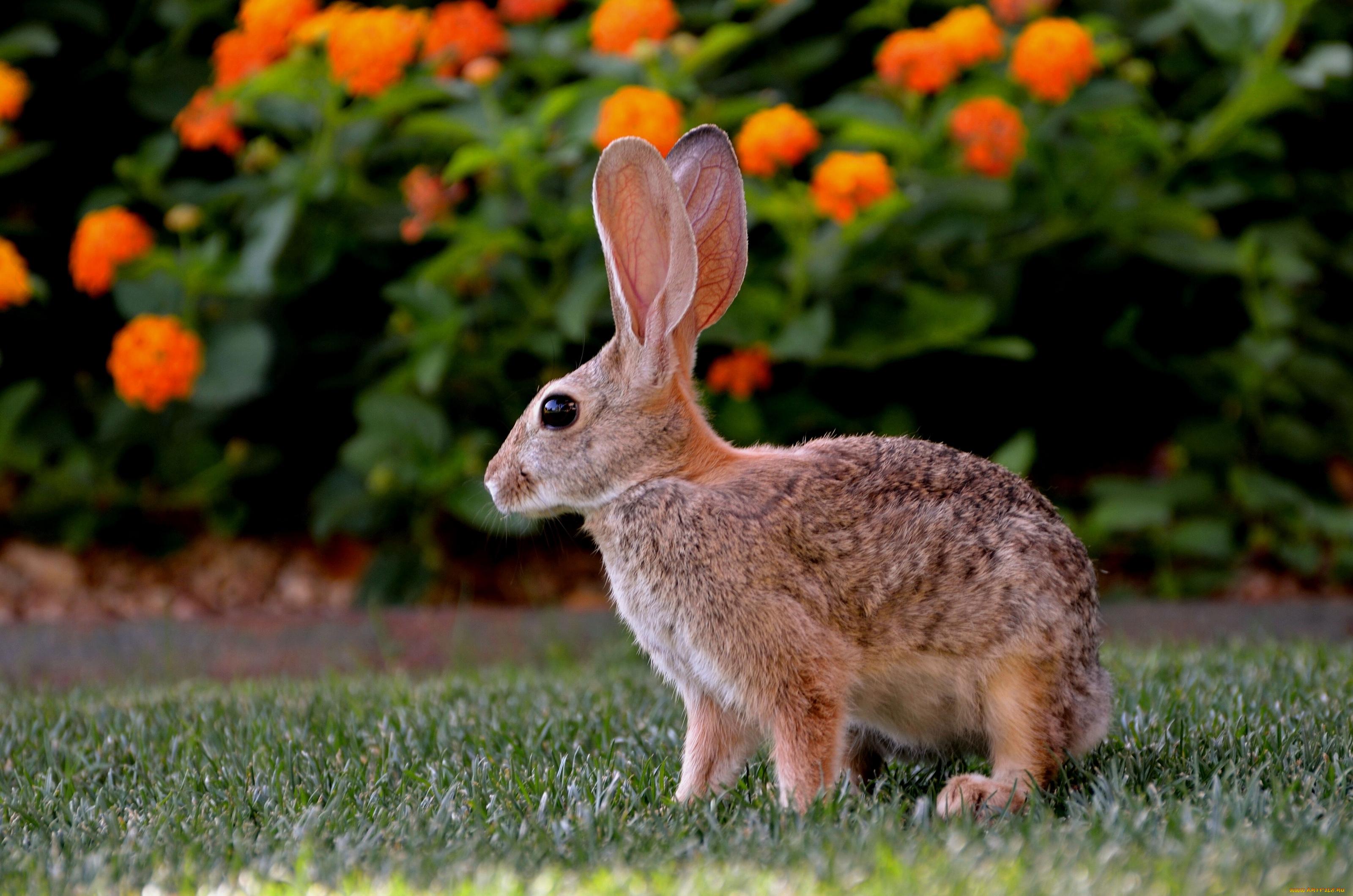 природа животные ккартинки зайцы цветы загрузить