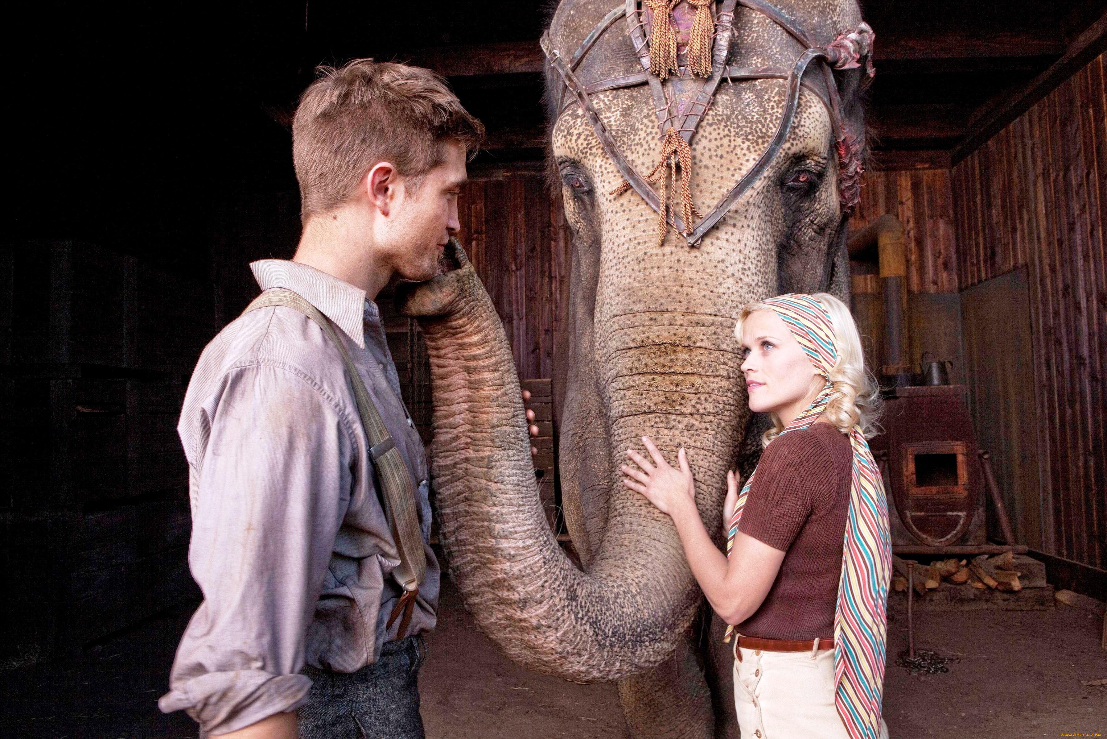 elephant-interracial-list-movie-boys-hump-chair-nude