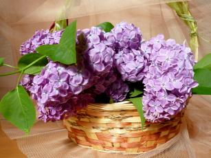 обоя цветы, сирень, корзина