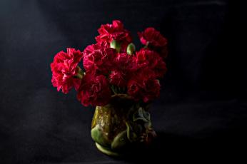 обоя цветы, гвоздики, тёмный, фон, букет