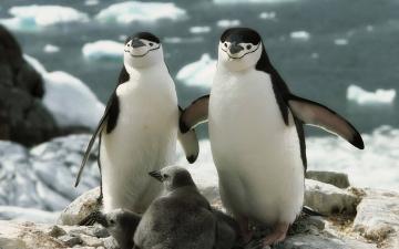Картинка животные пингвины