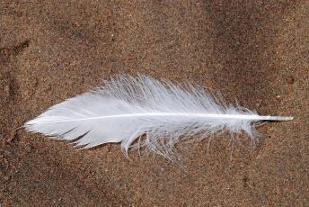 Картинка разное перья перо