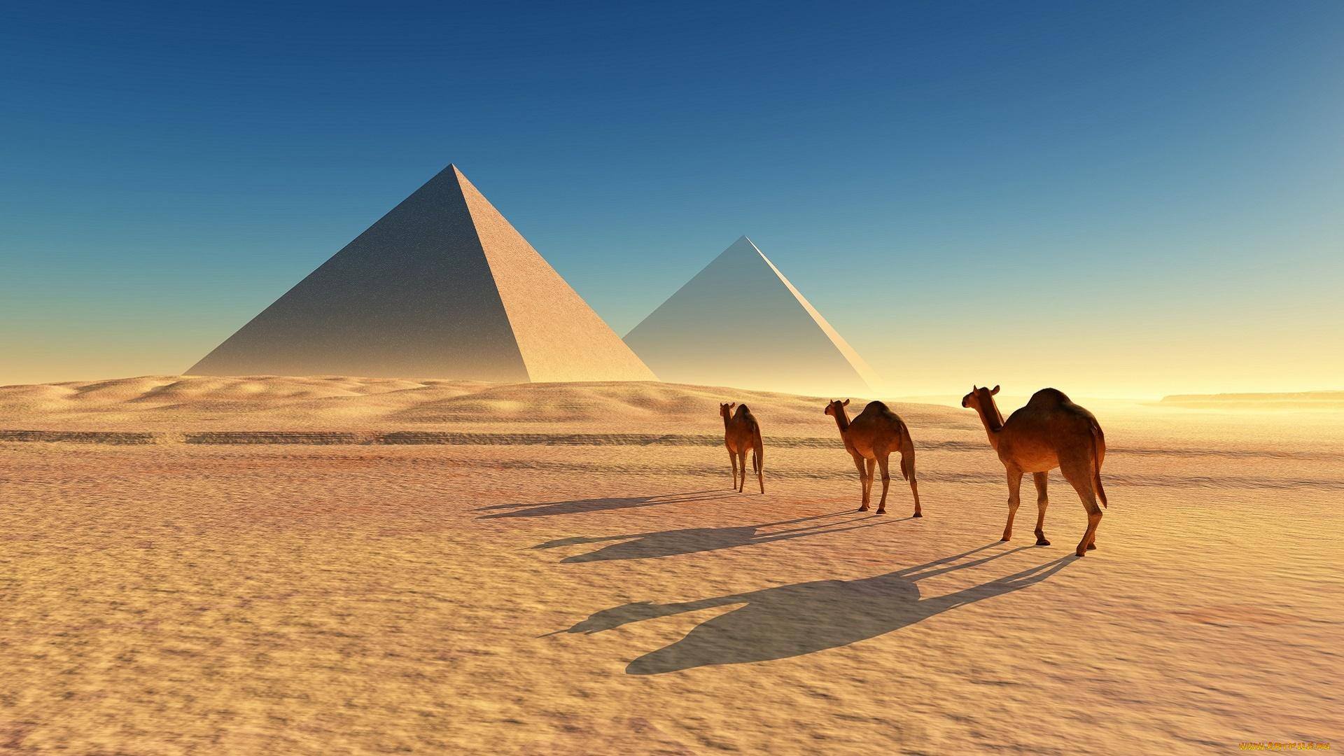 верблюды пустыня закат без регистрации