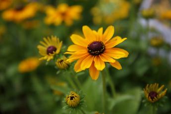 обоя цветы, бутоны, красиво, лето