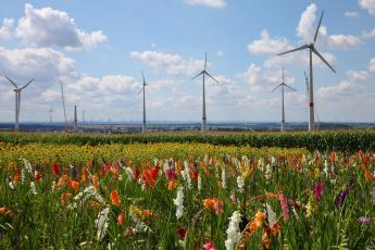 обоя разное, мельницы, мельница, цветы, пейзаж, облака, лето, красиво, гладиолусы