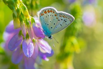 обоя животные, бабочки,  мотыльки,  моли, фон, макро, фиолетовый, цветок, бабочка